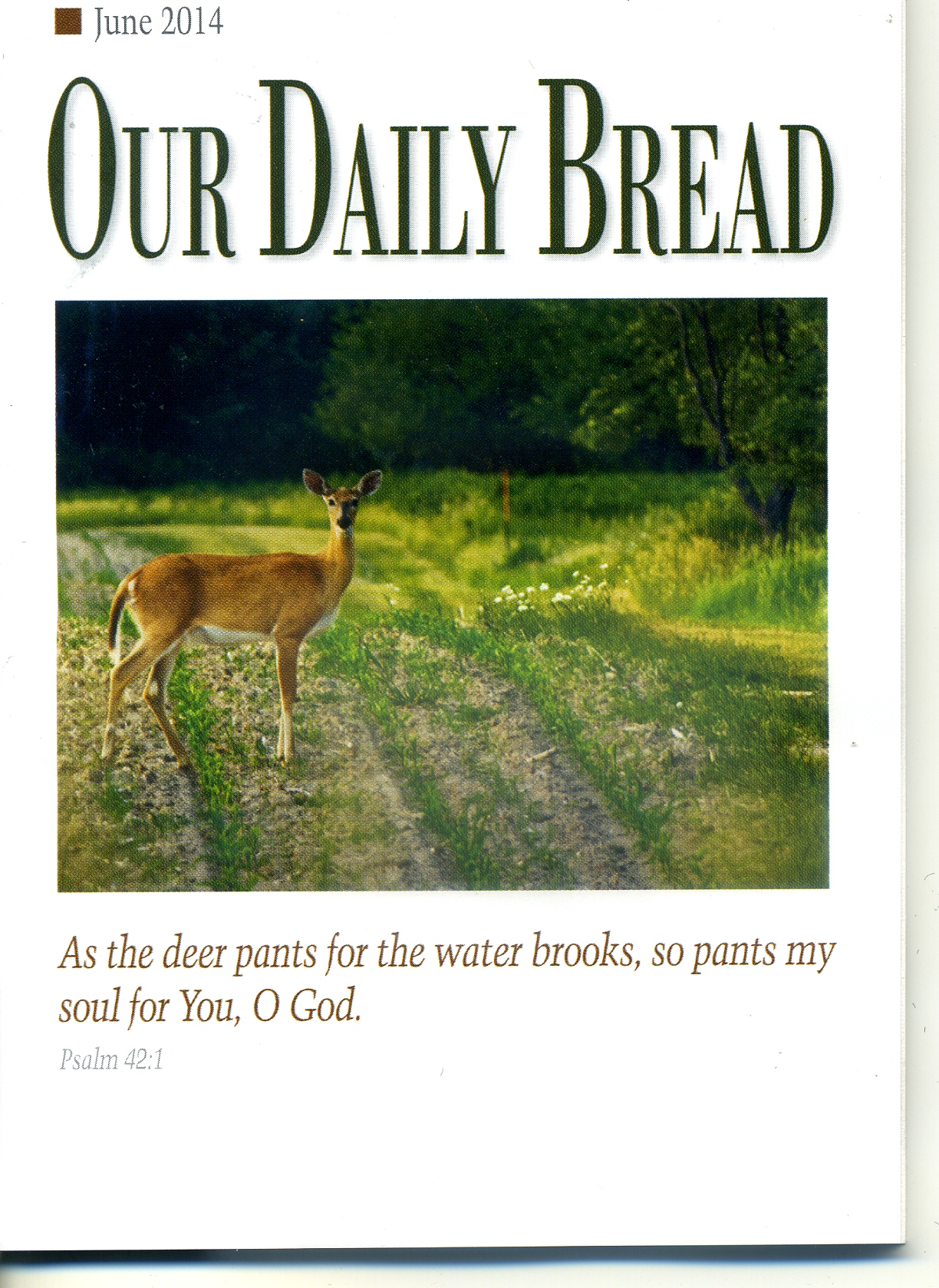 daily bread 2014 pdf